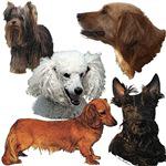 New - Dog Breed Designs