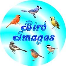 <b>BIRD LOVER GIFTS</b>