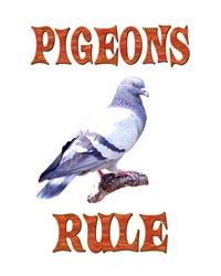 <b>PIGEONS RULE</b>