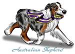 Blue Merle Australian Shepherd