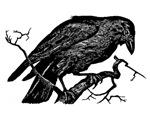 Vintage Raven in Tree Illustration
