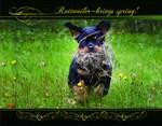 Rottweiler Brings Spring