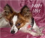 PAPILLON/SMALL DOG LOVERS