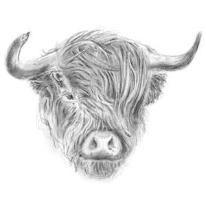 Windswept Highland Cow