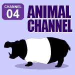 Animal Channel