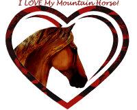 I <B>LOVE </B> My Mountain Horse!
