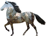 Mtn Horses