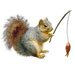 Fishing Squirrel