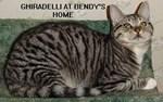 Ghiradelli Kitty