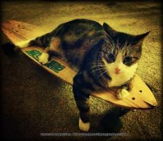 Skateboard Cat