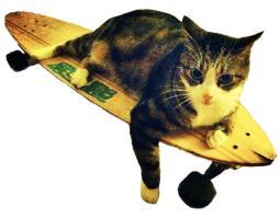 Skateboard Cat - Cut Out