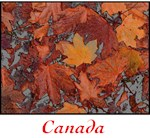 Canada and Maple Leaves