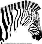 Grant's Zebra Portrait Looking This Way