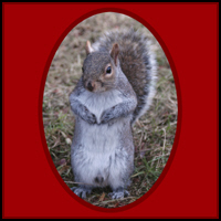 SQUIRREL GIFTS & T-SHIRTS