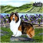 Shetland Sheepdog Sable
