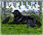 Newfoundland Dog and Pups