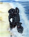 Newfoundland Surf Runner