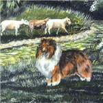 Sable Sheltie with Sheep