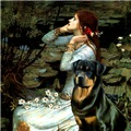 OPHELIA<br>& Rottweiler #3