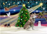 CHRISTMAS MAGIC<br>& Siberian Husky