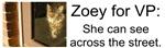Zoey for VP Bumperstickers