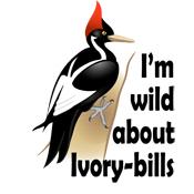 I'm Wild About Ivory-bills
