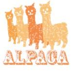 Alpaca4: Orange