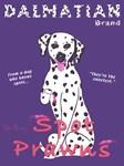 Dalmatian Spot Prawns