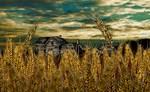 Farm House in Wheat Field