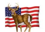American White Tail Buck Deer