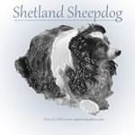 Porcelain Shetland Sheepdog