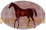 The Darley Arabian