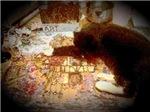 Puzzle Cat pt. 2