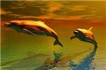 Dolphin-evening
