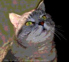 Morning Light ~ Tabby Cat