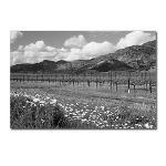 Napa Valley California Wine Country Postcards