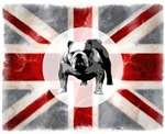 Union Jack and Bulldog