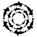 Orca Circles