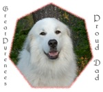 Great Pyrenees Proud Dad