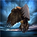Eagles & Other Birds