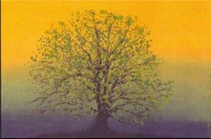 31.summertree..?