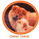 Chow Chow Mama & Puppy Photo