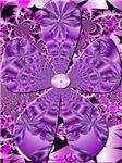 Purple Panzy