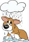 Raincloud Corgi