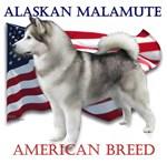 Alaskan Malamute: American Breed