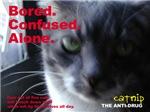 Catnip: The Anti-Drug