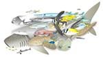 sharks and pelagic fish