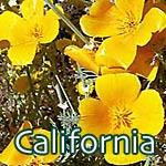 California Photography t-shirts