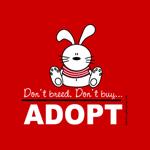 Adopt a bunny !