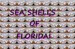 Sea Shells of Florida